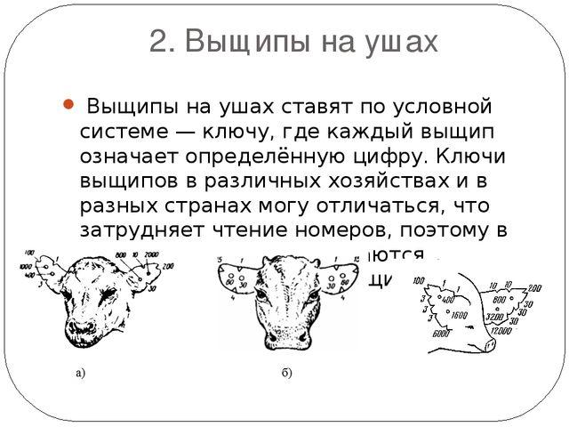 2. Выщипы на ушах Выщипы на ушах ставят по условной системе — ключу, где каж...