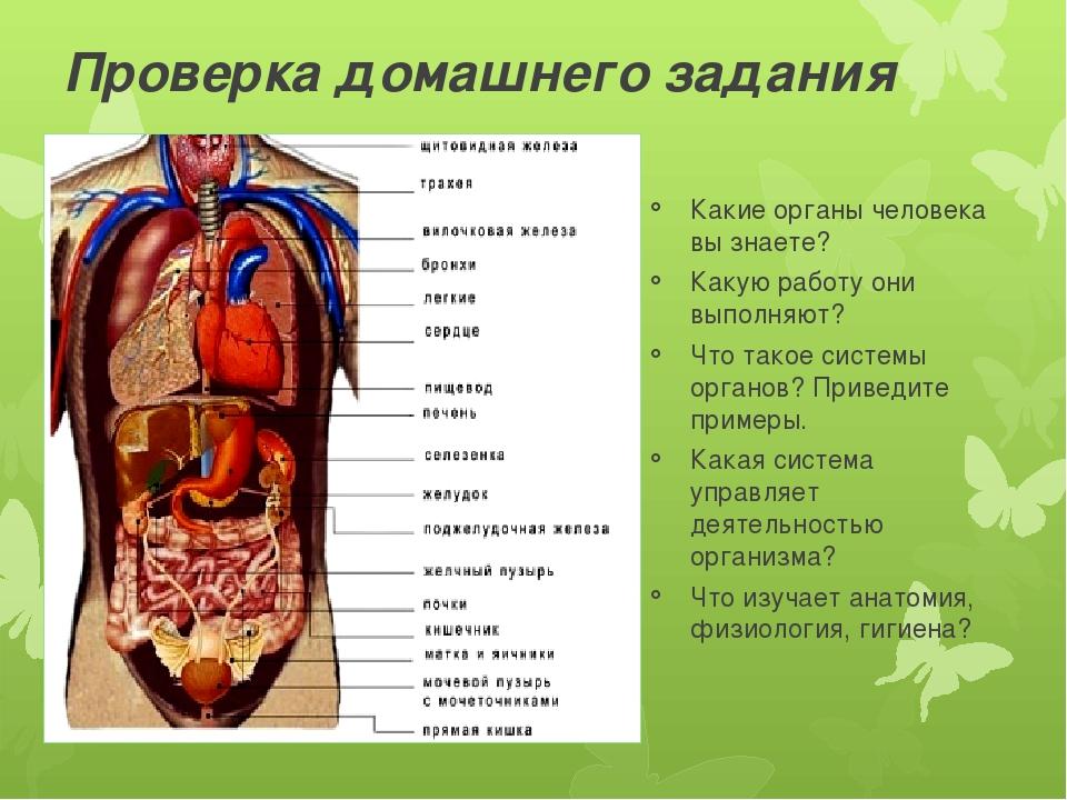 Картинки внутренних органов человека с описанием