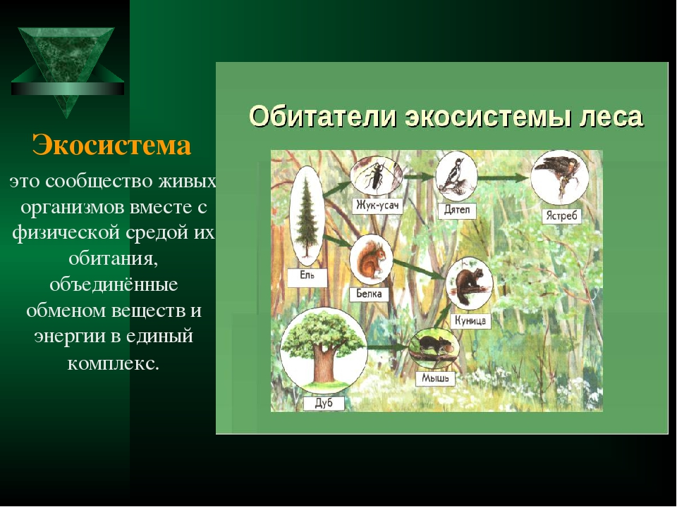 Экосистема пример картинки