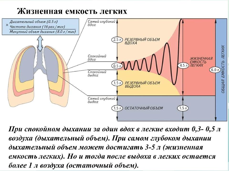 determining lung capacity