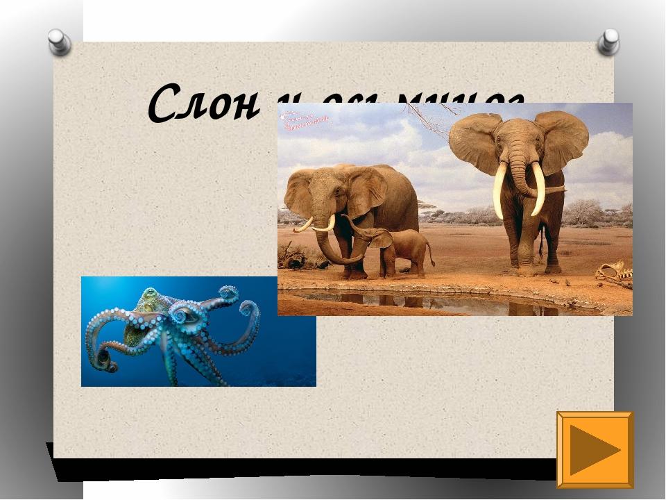Слон и осьминог