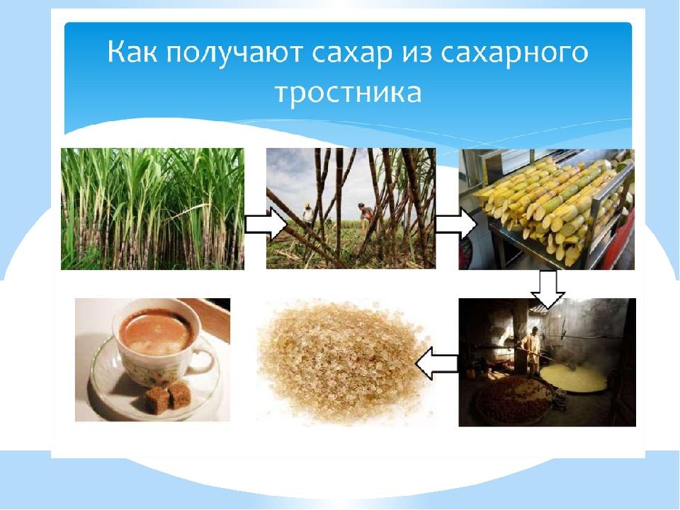 Из чего делается сахар картинки