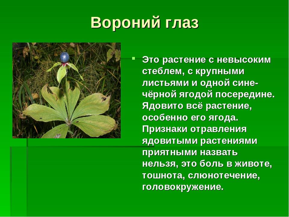 всем здоровья ядовитые растения фото с названиями и описанием этого приема