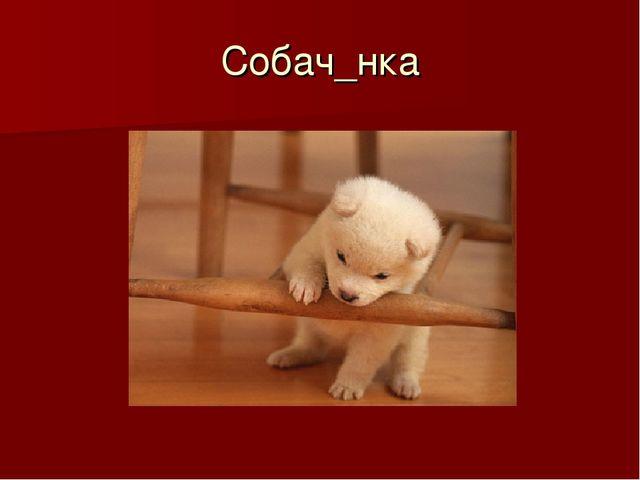 Собач_нка