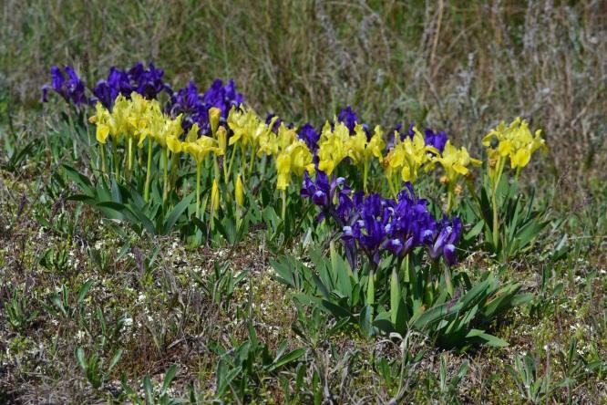 Цветы волгоградской области названиями
