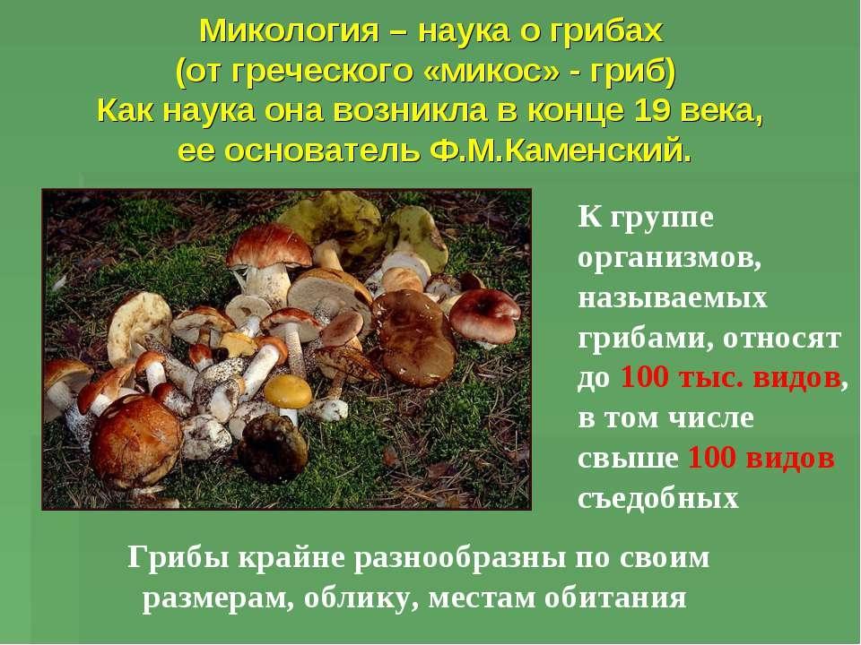 Презентация про грибы в картинках