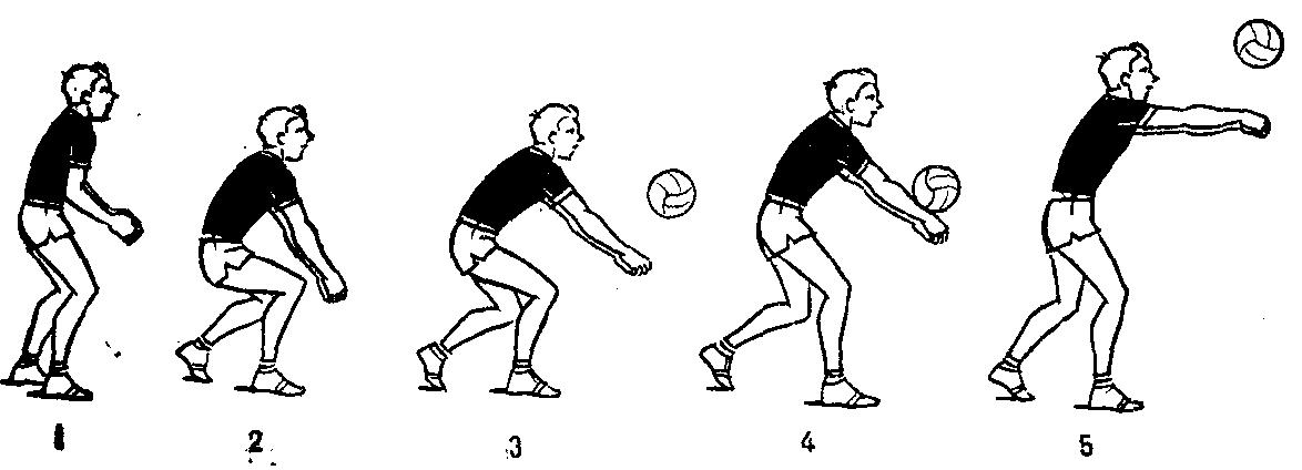написала прием мяча волейбол картинки одном снимков