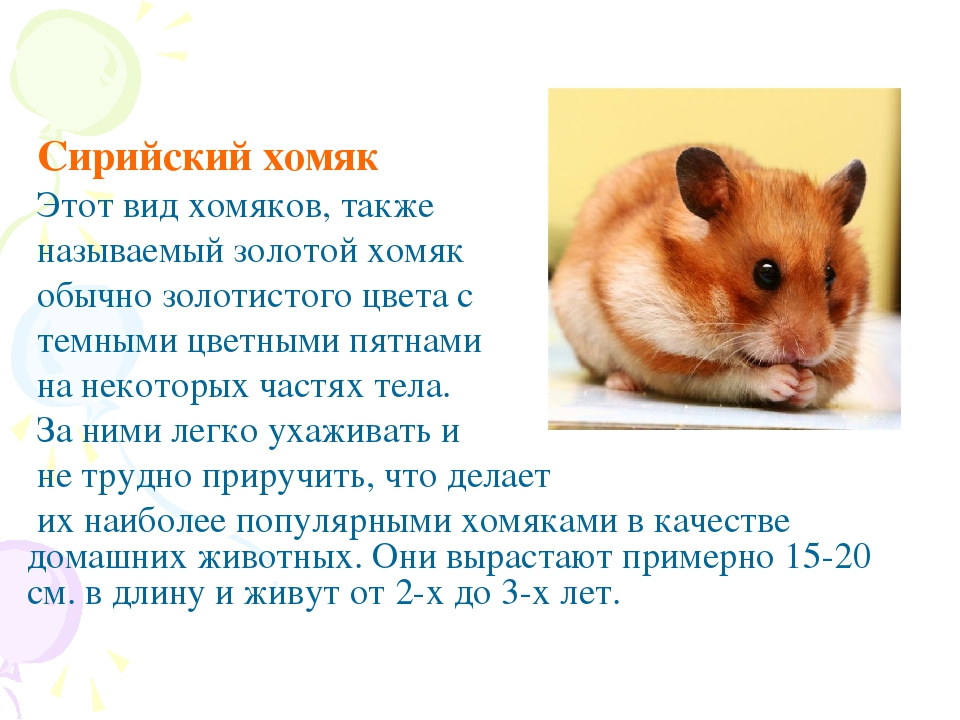 разновидности хомяков фото и описание рецепт, также