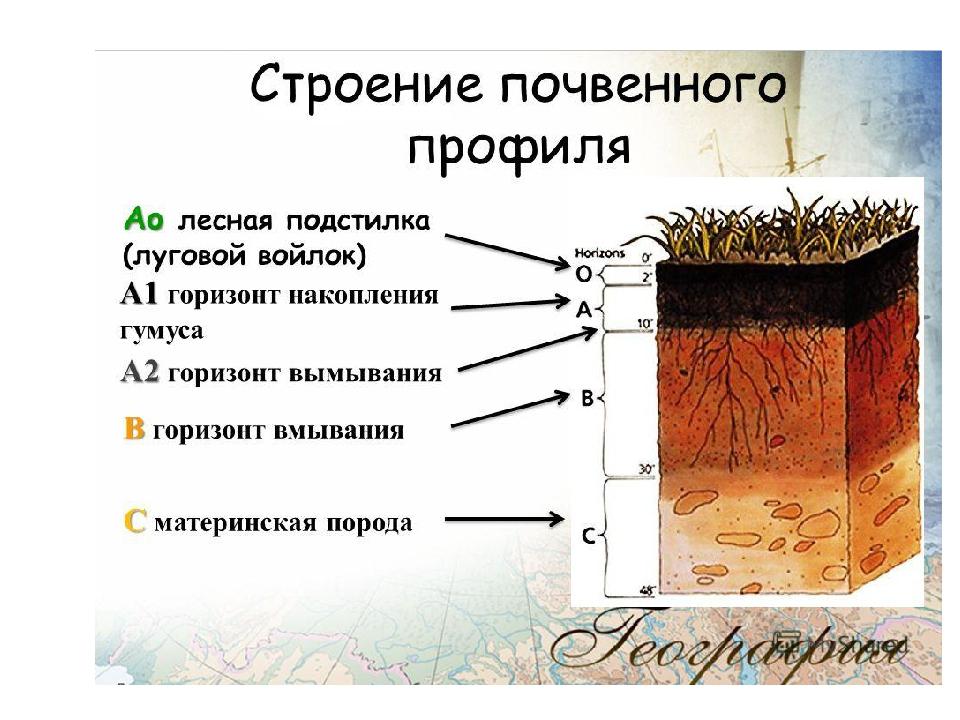 Состав почва в картинках