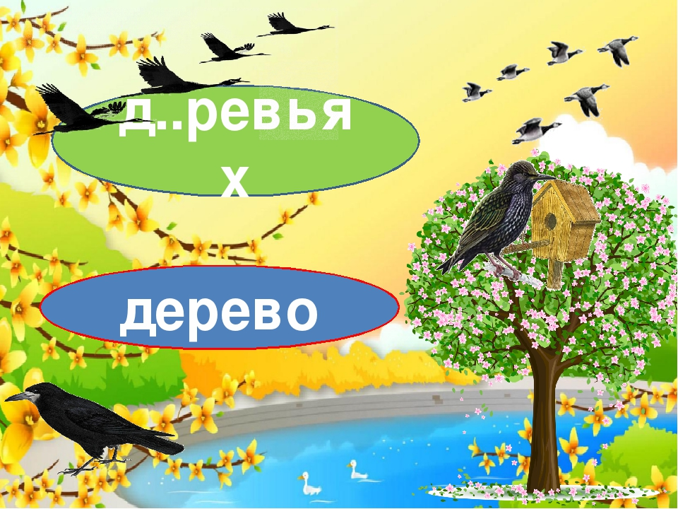 д..ревьях дерево