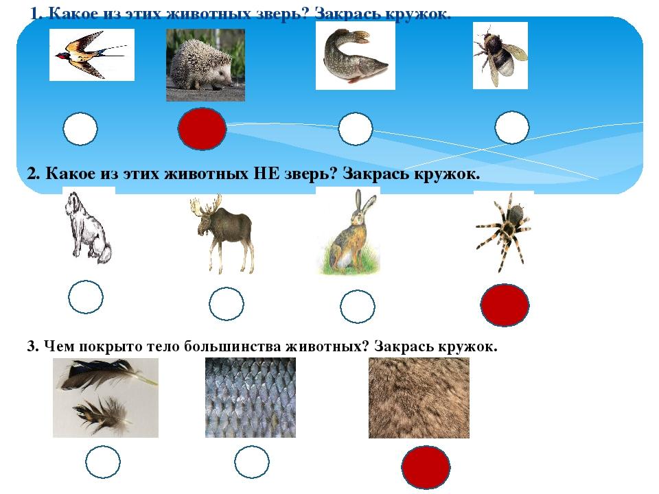 1. Какое из этих животных зверь? Закрась кружок. 2. Какое из этих животных НЕ...