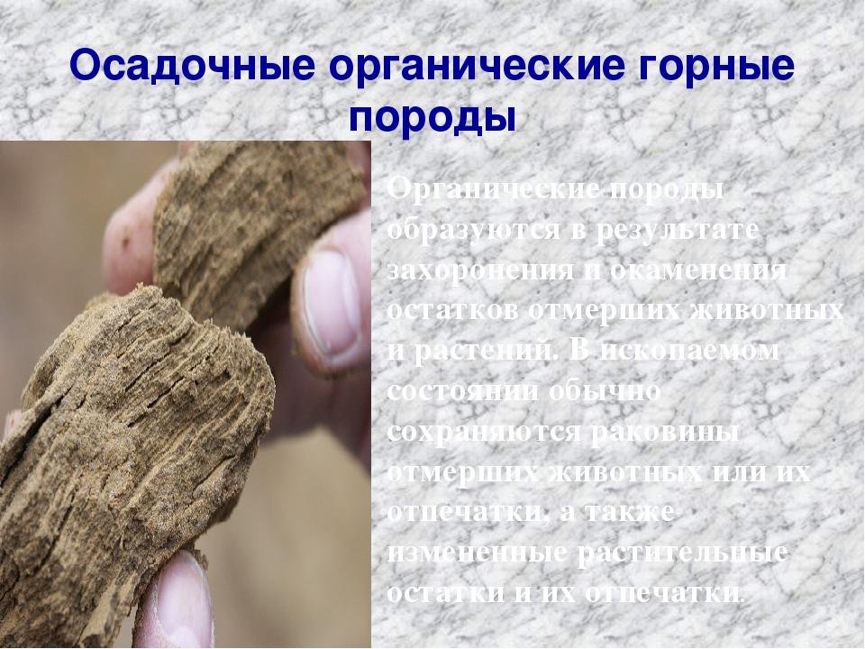 Осадочные органические горные породы Органические породы образуются в результ...