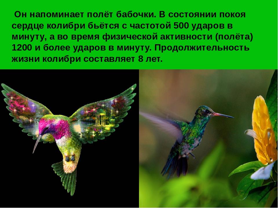 колибри описание птицы многие мальчишки того