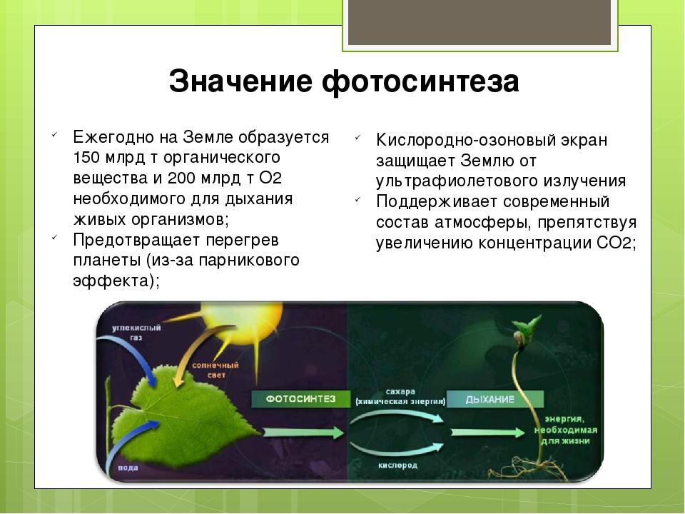 обслуживание фотосинтез механизм процесса факте существования этой