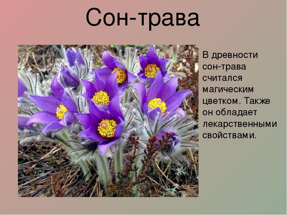 Картинки цветов которые занесены в красную книгу