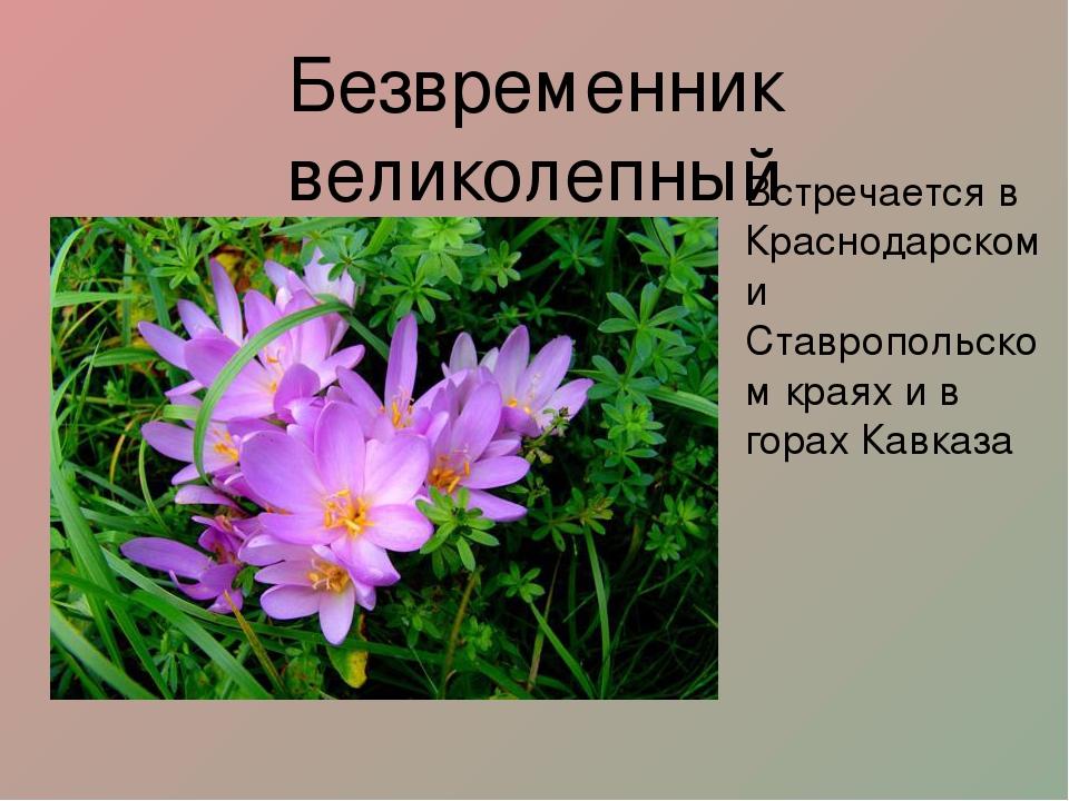 редкие растения краснодарского края с картинкой использование веревки