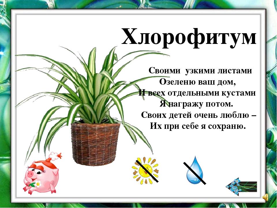 Стихи к подарку комнатный цветок 43