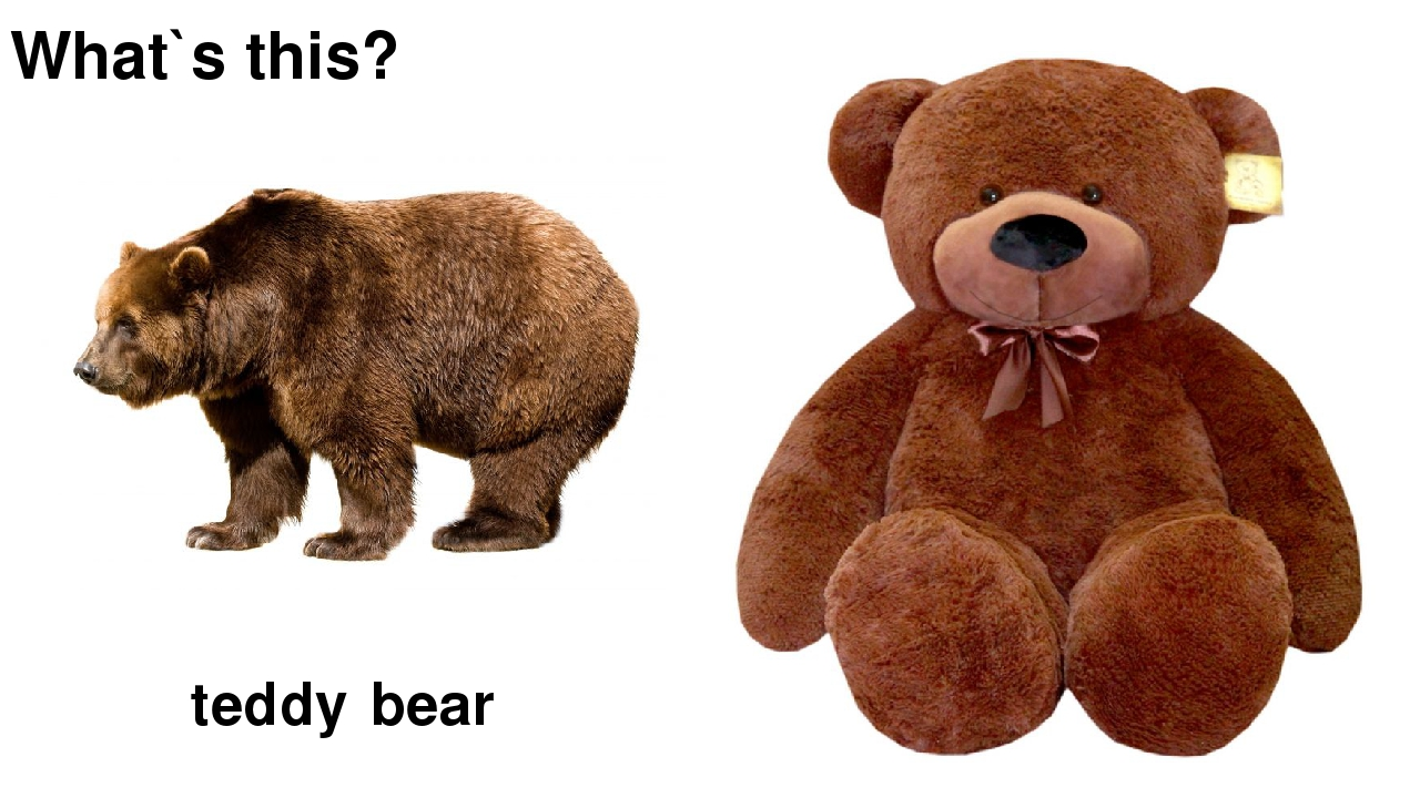What`s this? bear teddy