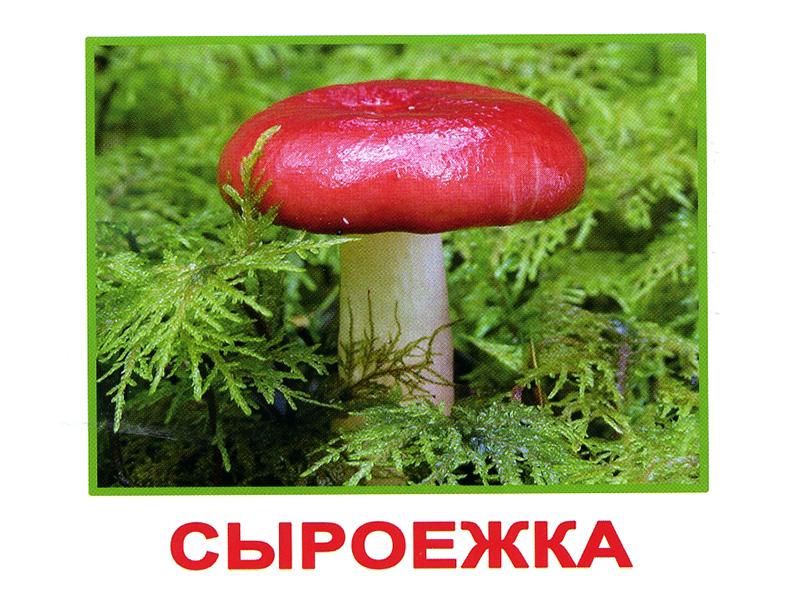 Картинки съедобных грибов с надписями