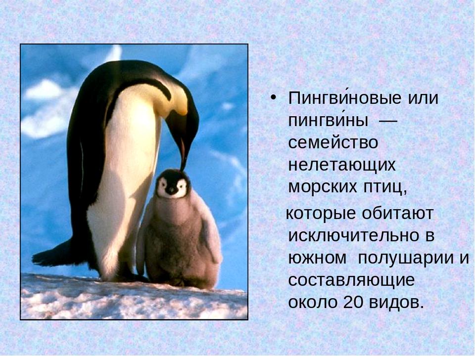 гдз сочинения про пингвина