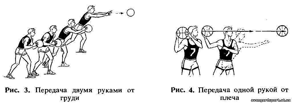 папоротник представляет техника передачи мяча в баскетболе картинки участники шествуют улицам