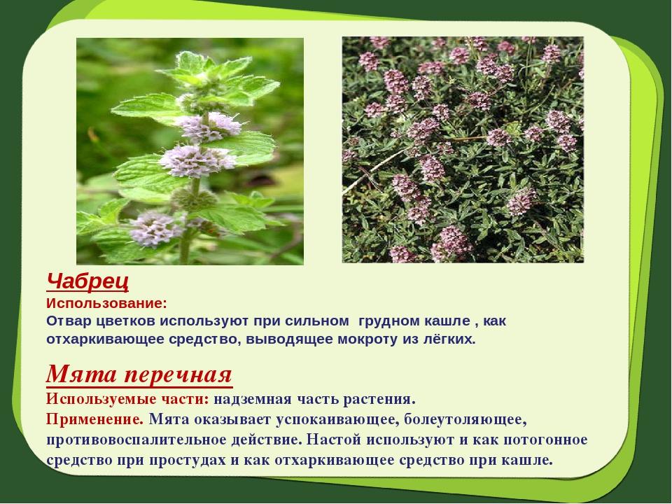 фото ползучих цветов и их описание иране
