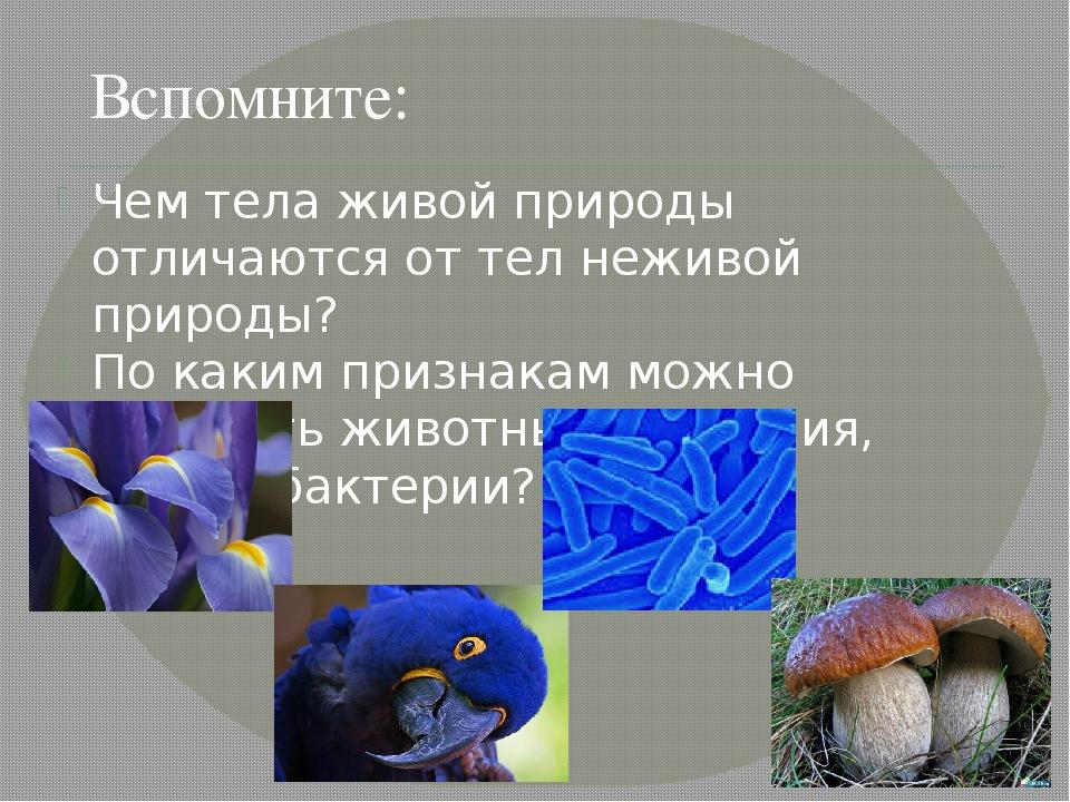 какими признаками живые организмы различаютс¤ от тел неживой природы