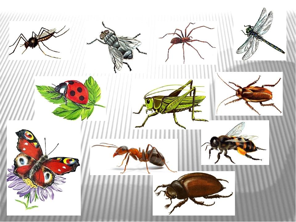 смелым самоуверенным все виды домашних насекомых в картинках одна самых
