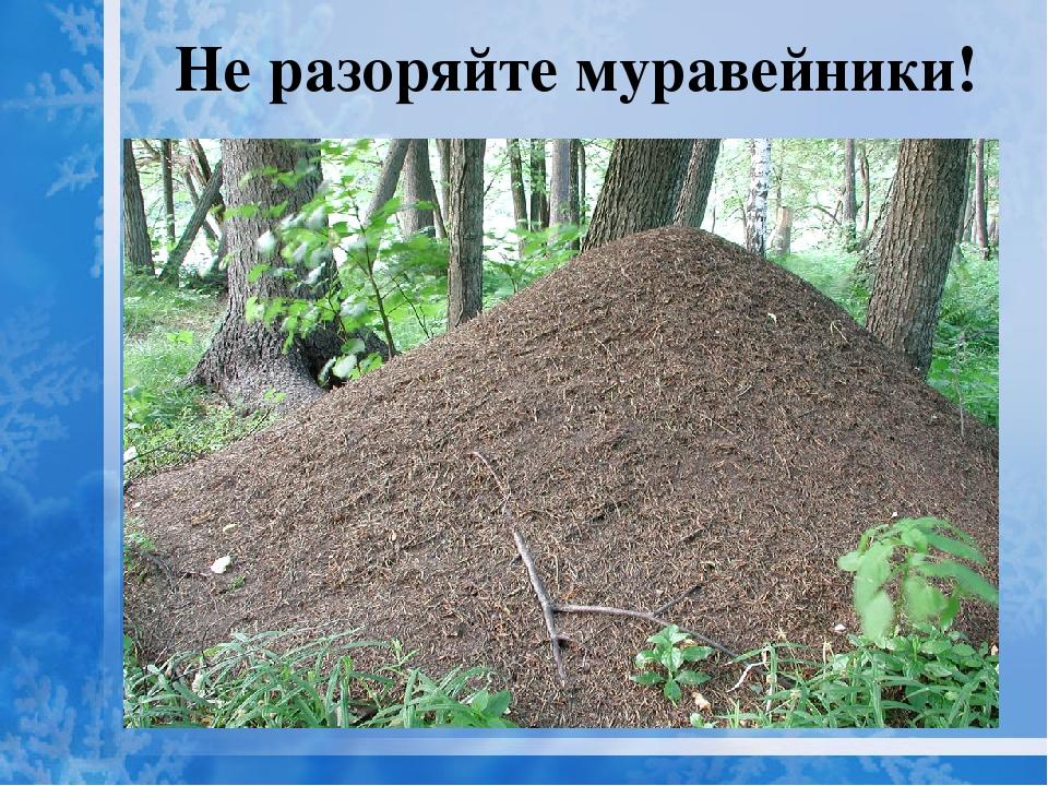 Не разоряйте муравейники картинка