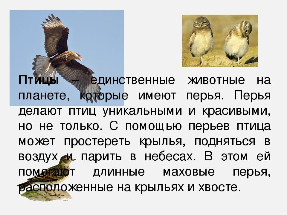 зачем птицам хвост
