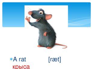 A rat [ræt] крыса