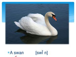 A swan [swɒn] лебедь