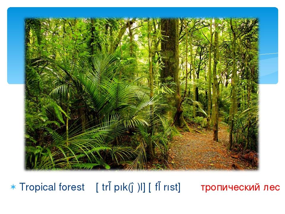 Tropical forest [ʹtrɒpık(ə)l] [ʹfɒrıst] тропический лес
