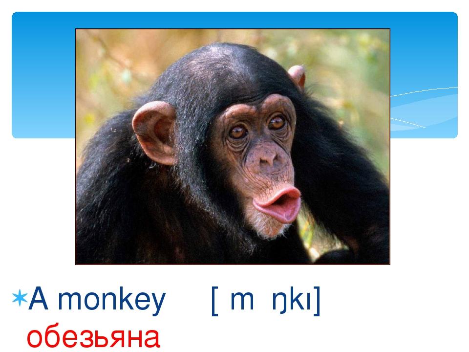 A monkey [ʹmʌŋkı] обезьяна