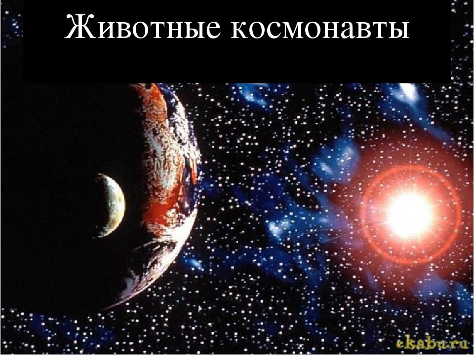 Животные космонавты
