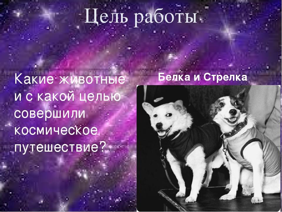 Цель работы Белка и Стрелка Какие животные и с какой целью совершили космичес...