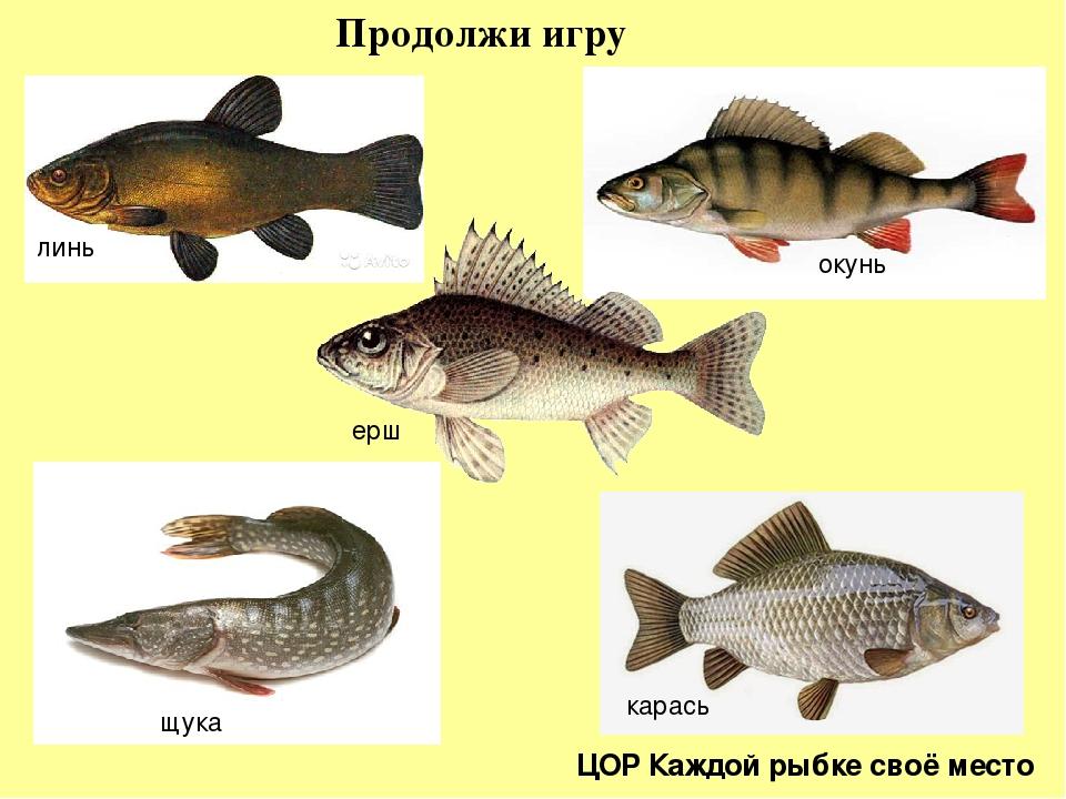 работодатели картинки рыб окуня щуки вошёл
