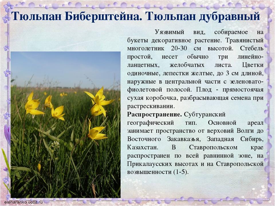 держать растения ставропольский край фото описание может похвастаться