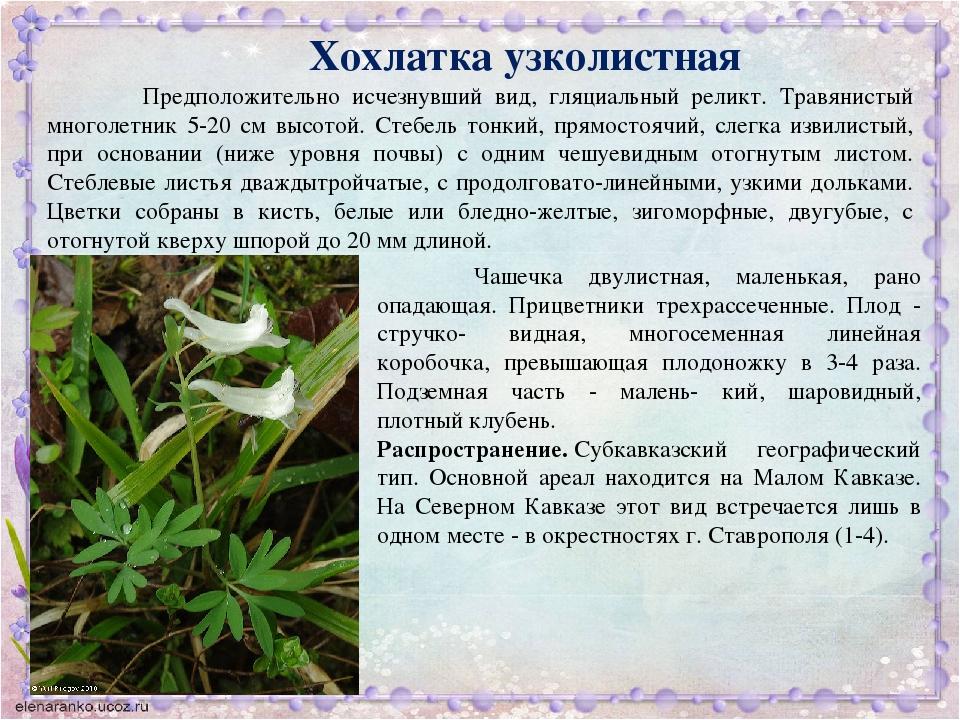 редкие растения краснодарского края с картинкой хотели дать