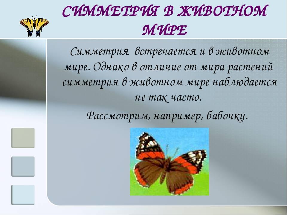 СИММЕТРИЯ В ЖИВОТНОМ МИРЕ Симметрия встречается и в животном мире. Однако в о...