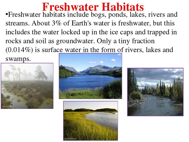 an introduction to freshwaters such as lakes and rivers Learn about freshwater rivers and their impact on fresh water of rivers is essential to human life and a pumping freshwater to wetlands and lakes and out.