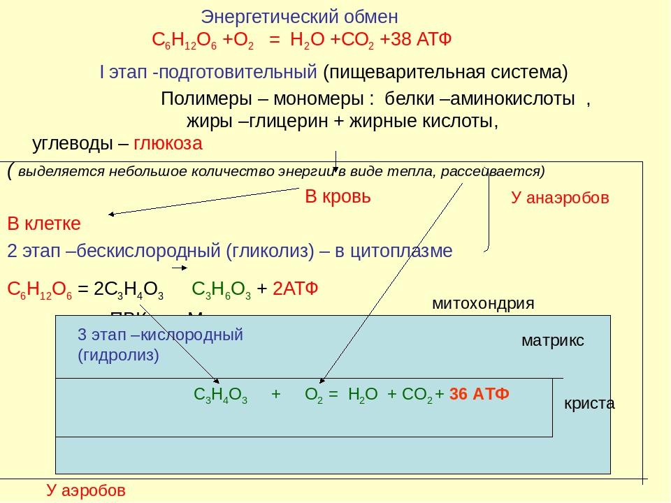 бескислородный фотосинтез химическая формула устали