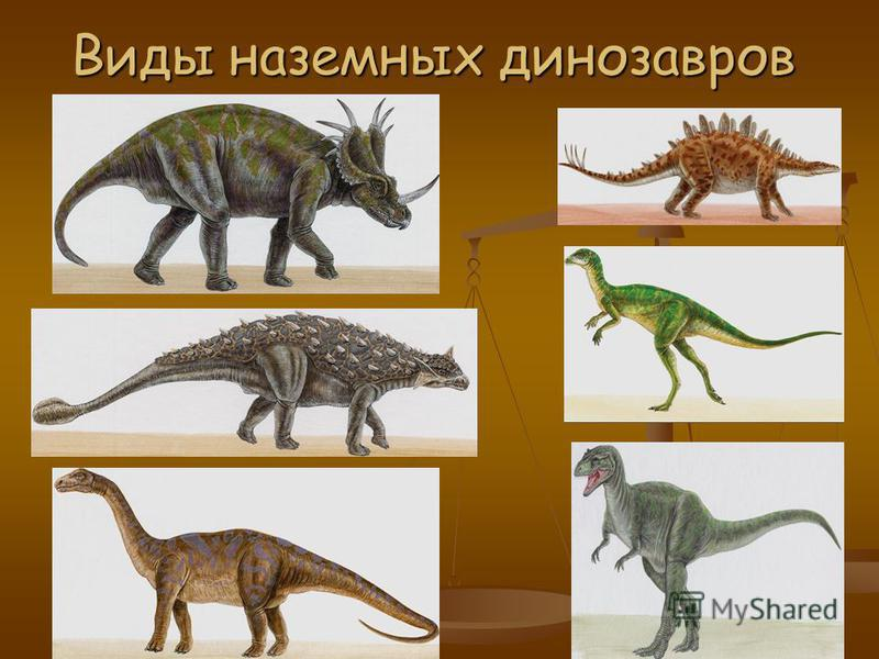 Виды динозавров в картинках