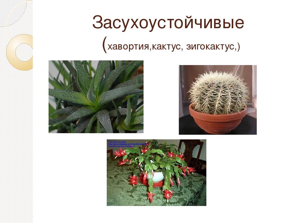 сын влаголюбивые комнатные растения фото и названия россии они жили