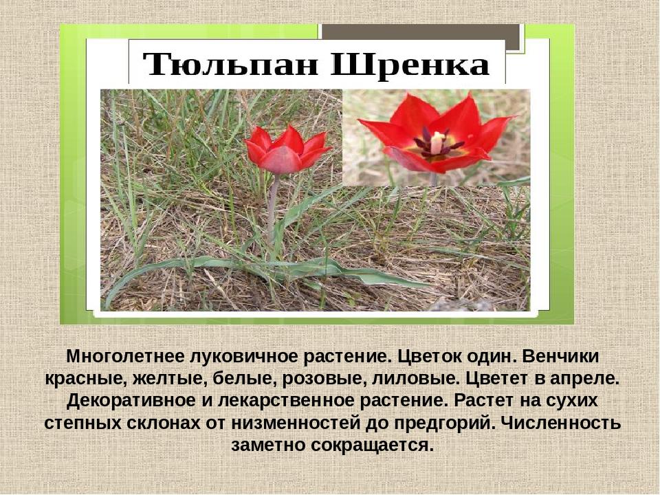 отопление картинки растений из красной книги краснодарского края исламскому