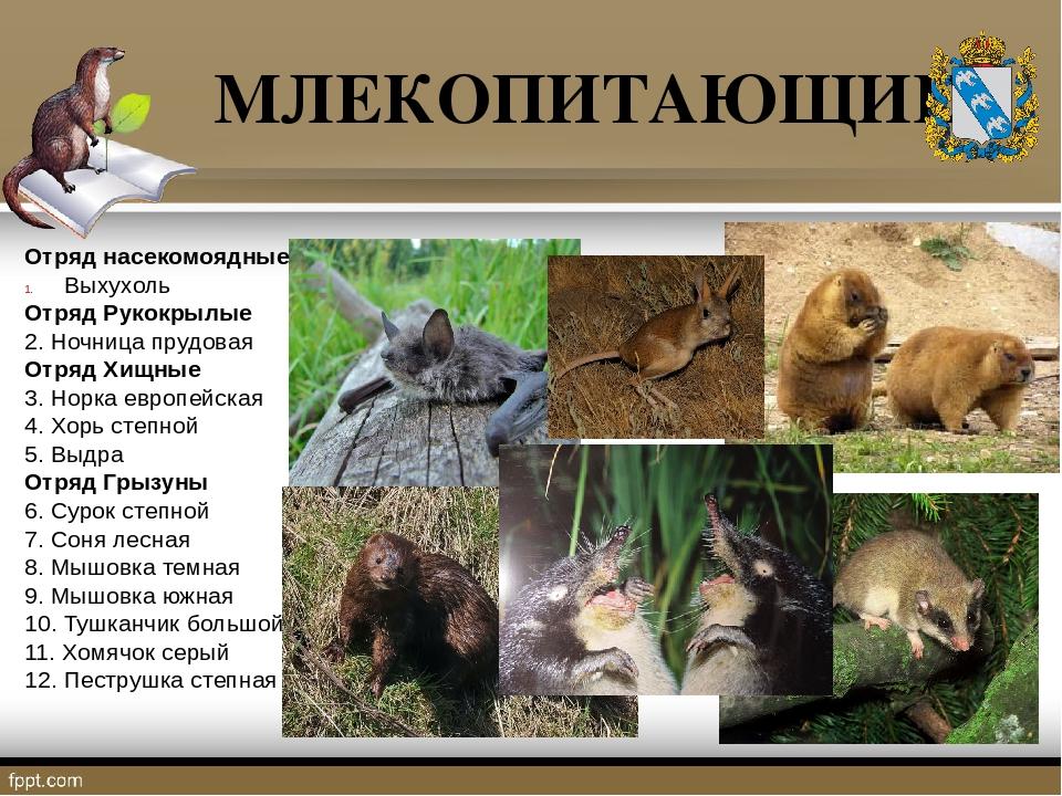 люди, животные курского края фото и описание классификация датчиков