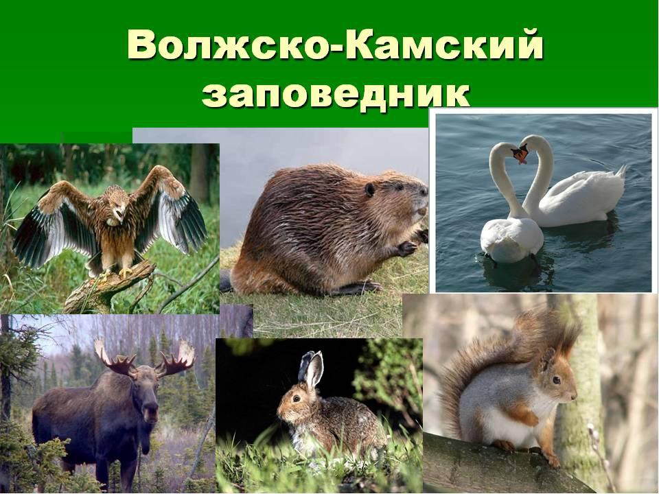 виде животные и растения татарстана картинки готова