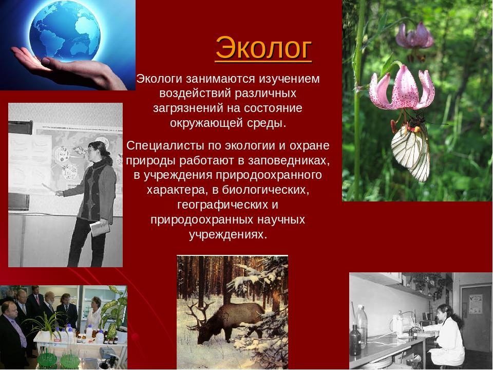 Представление профессии эколог стихи