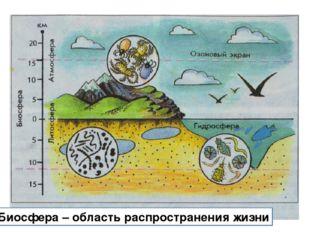 Биосфера – область распространения жизни