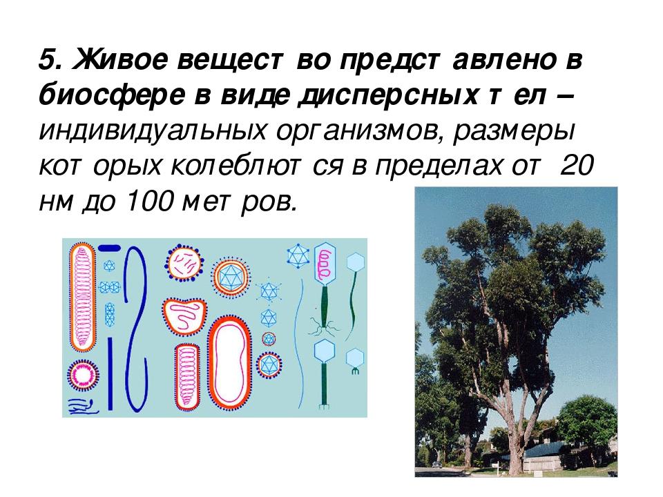 5. Живое вещество представлено в биосфере в виде дисперсных тел – индивидуаль...